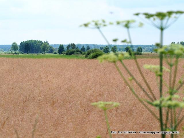 podlasie, pejzaz, widoczki, laka, pole, kraina szczesliwosci, obrazek, krajobraz, weekend