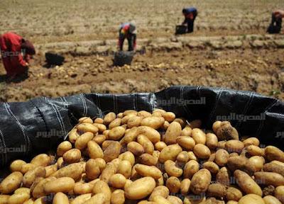الحجر الزراعي نجح قبل ثلاثة أشهر في فتح الأسواق التركية أمام البصل المصري