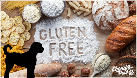 Gluten and its Effect on Dogs - Learn how Gluten can affect your dog's health