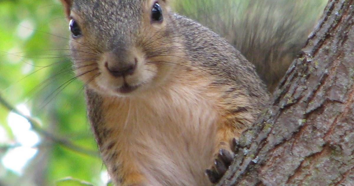Backyard Critter Watch Tree Squirrels