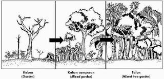 Edaphis Ekosistem Pekarangan dan Talun