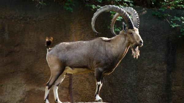 الداخلية والنيابة العامة تتصديان لشبكات دولية تتاجر في حيوانات مهددة بالانقراض