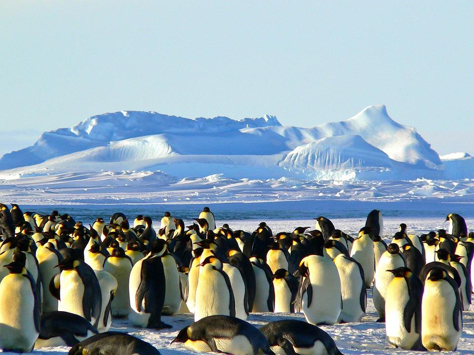 Facts about Antarctica in Hindi   अंटार्कटिका के बारे में रोचक तथ्य   अंटार्कटिका महाद्वीप के बारे में जानकारी