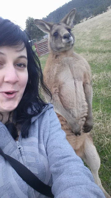 Kangaroo ready to take a pic