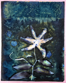 Wet cyanotype_Sue Reno_Image 91