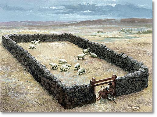 Фото баранов в одни ворота