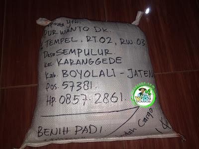 Benih pesanan  PURWANTO Boyolali, Jateng  (Setelah Packing)