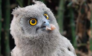Super Cute Owl Rescued From 'Black Magic' Poachers