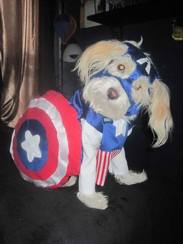 Cute dogs dressed as superheroes (17 pics)