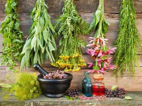 9 hierbas que ayudan a bajar de peso