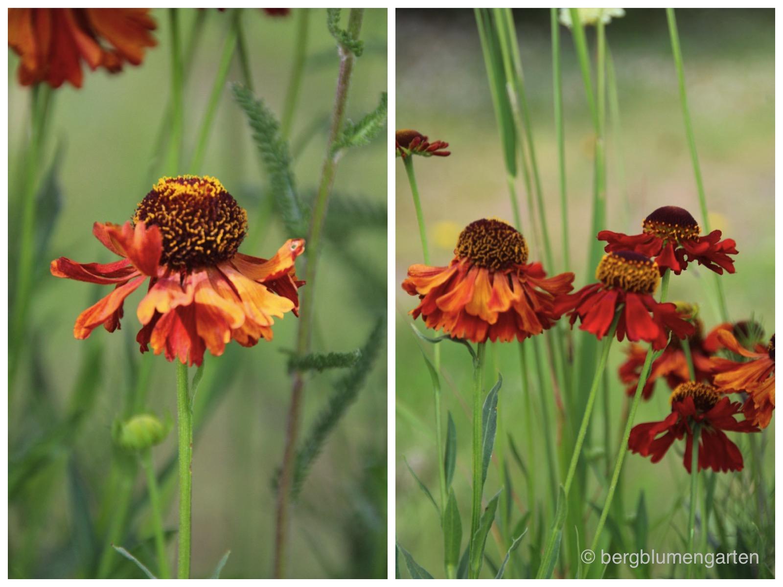 Das 5 Pflanzen Prinzip Bergblumengarten