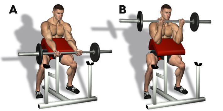 Image result for Skott bench workouts for biceps with EZ