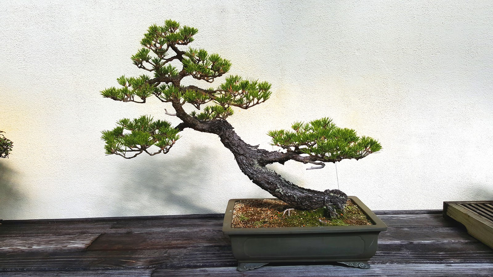 Bonsai Misadventures Bonsai Design Or What I Learned From