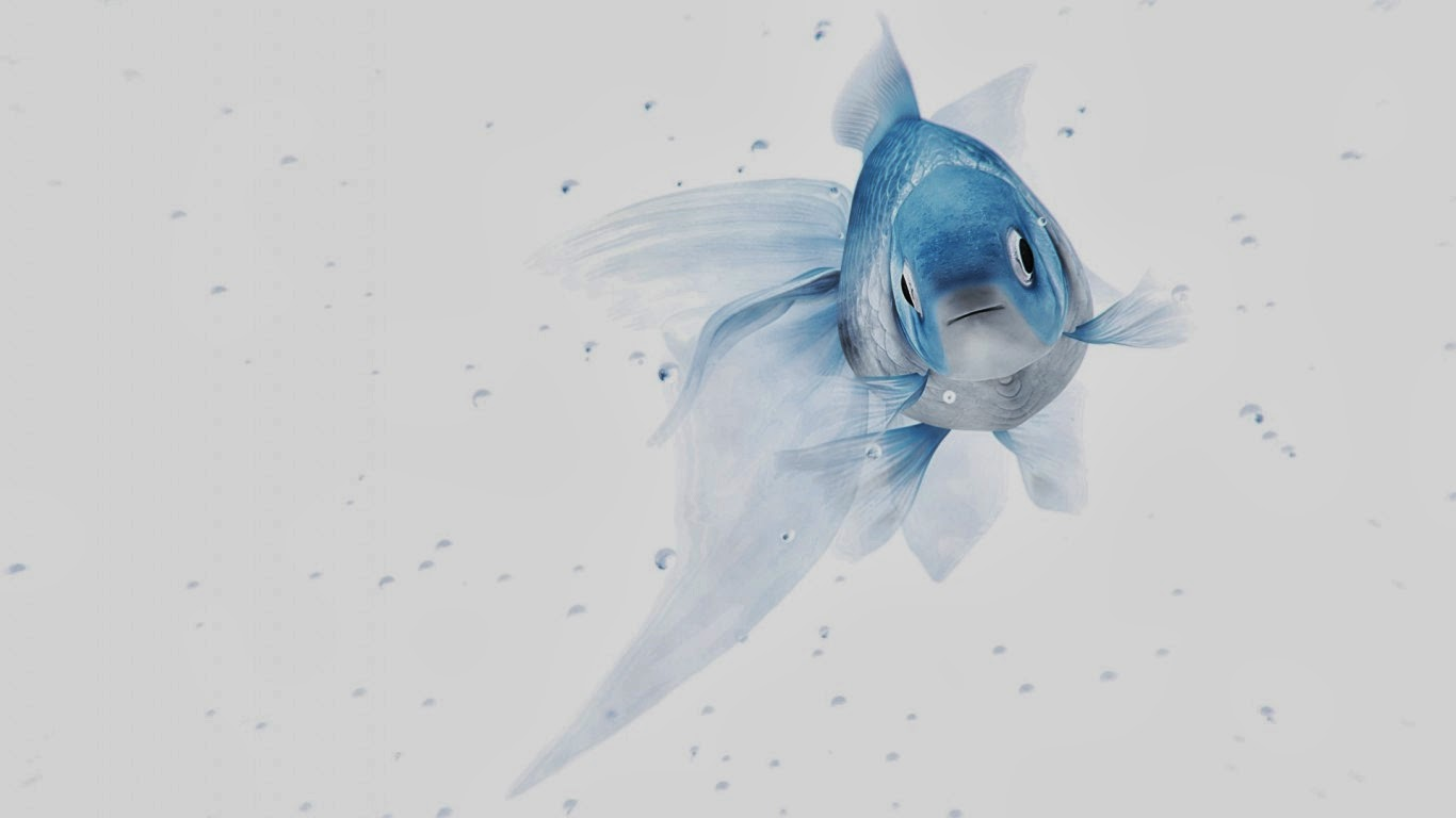 white-and-blue-fish-in-plain-background-image-download.jpg