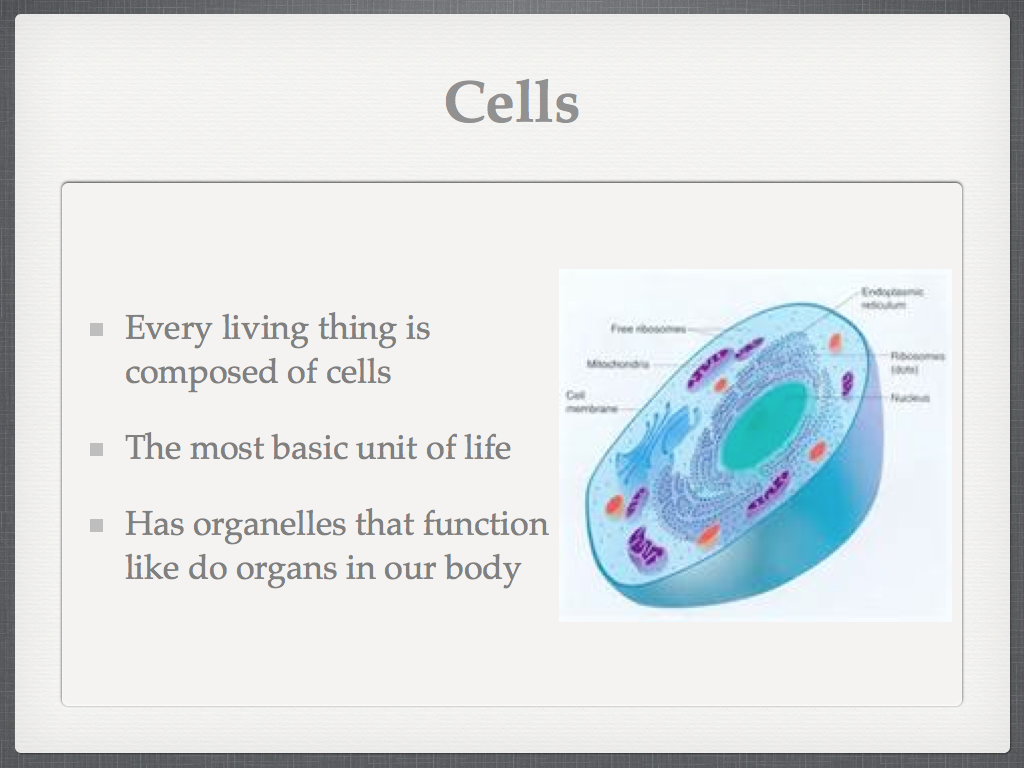 Sasic 6th Grade Adventures In Learning Cell Organelles Powerpoint