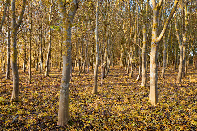 Autumnal woodland in the warm sun at Grafham Water in Cambridgeshire