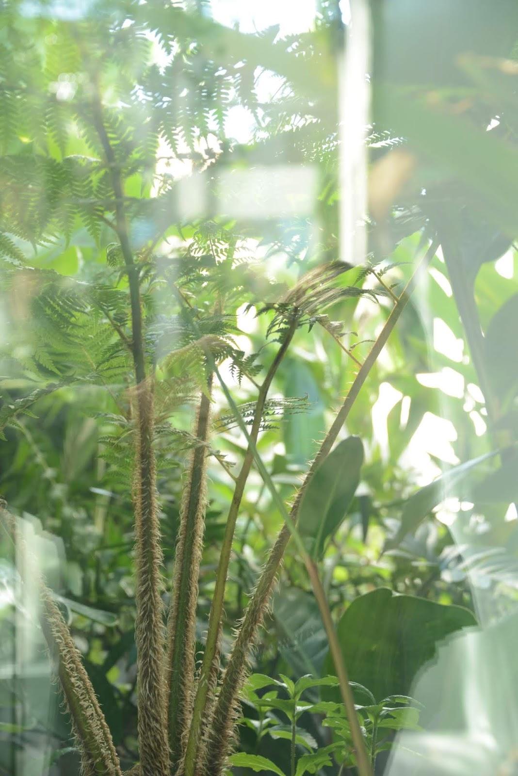 El verde en el jardín por @itasflowers