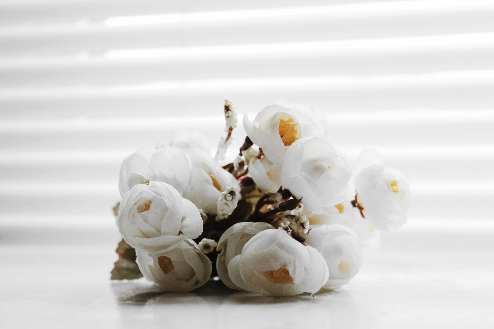 white roses, white, roses