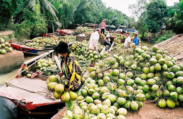 Vietnam And Fruit Kingdoms 1