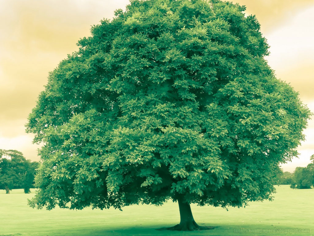 tree hd wallpapers - photo #16