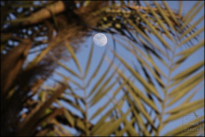 fotografia,naturaleza,palmera,luna,murcia,limites,serie,arte