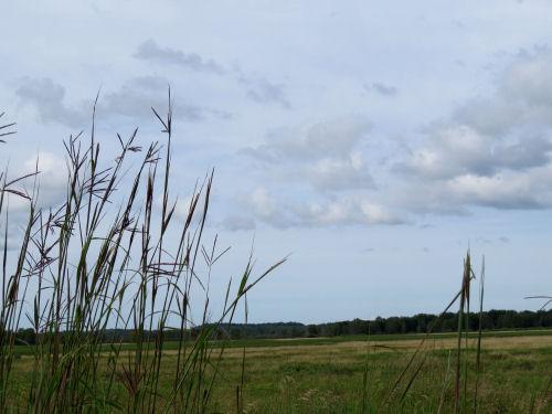 Walkinshaw Wetland