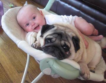 Smiješne slike: beba sa psom