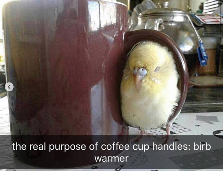 30 Funny Animal Pictures With Captions to Cure Your Boredom