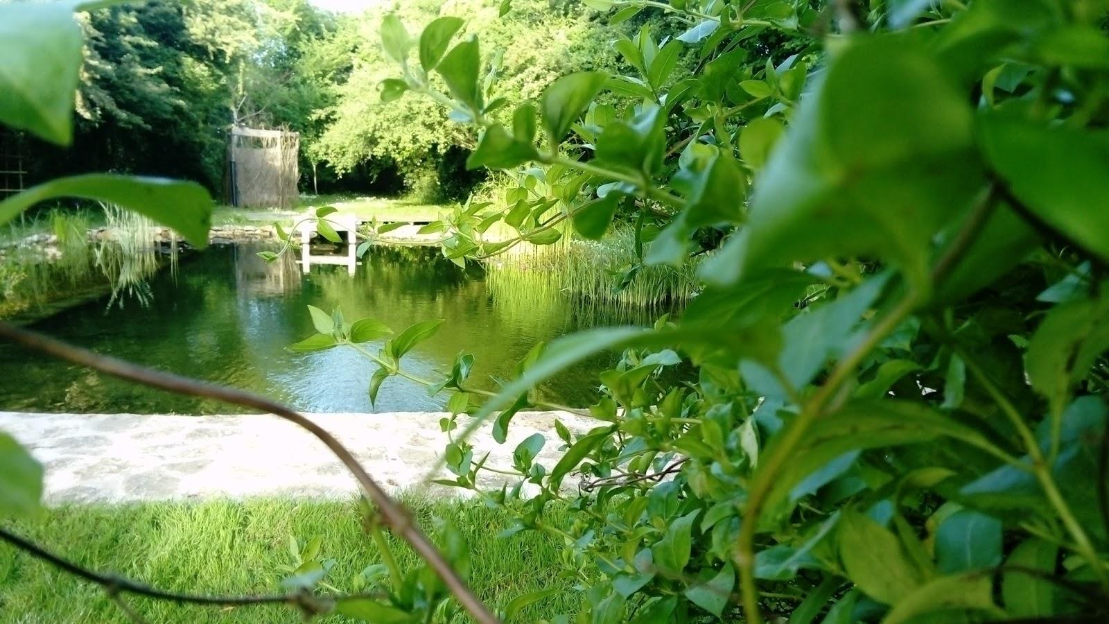 Bassin De Baignade Autoconstruction bassin de baignade naturelle en autoconstruction: printemps 2017