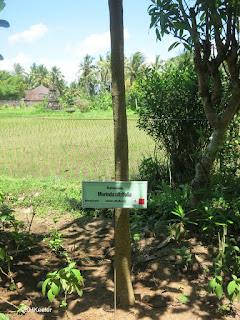 dye garden plant