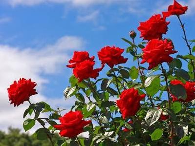 Penyesuaian Tumbuhan dengan Lingkungan dan Cara Melindungi