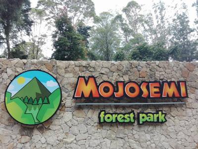 Wajib Kunjungi Lengkap dan Banyak Tempat Menarik Di Mojosemi Forest Park