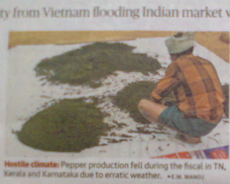 Vietnam Pepper Production 2018