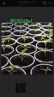 стоят несколько горшков в которых растут всходы растений