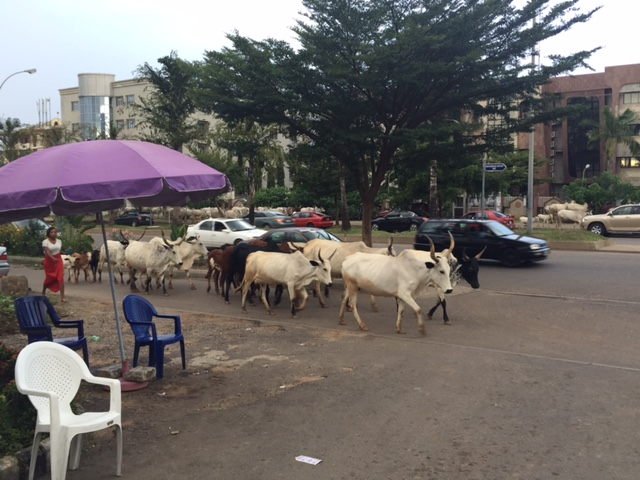 Cattle Rearers On Major Road In Abuja (Photo)