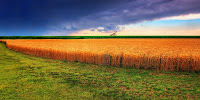 Wheat crops on the Kansas High Plains in the US depend on aquifer water. (Image Credit: James Watkins via Flickr) Click to Enlarge.