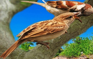 Sparrow and its kids