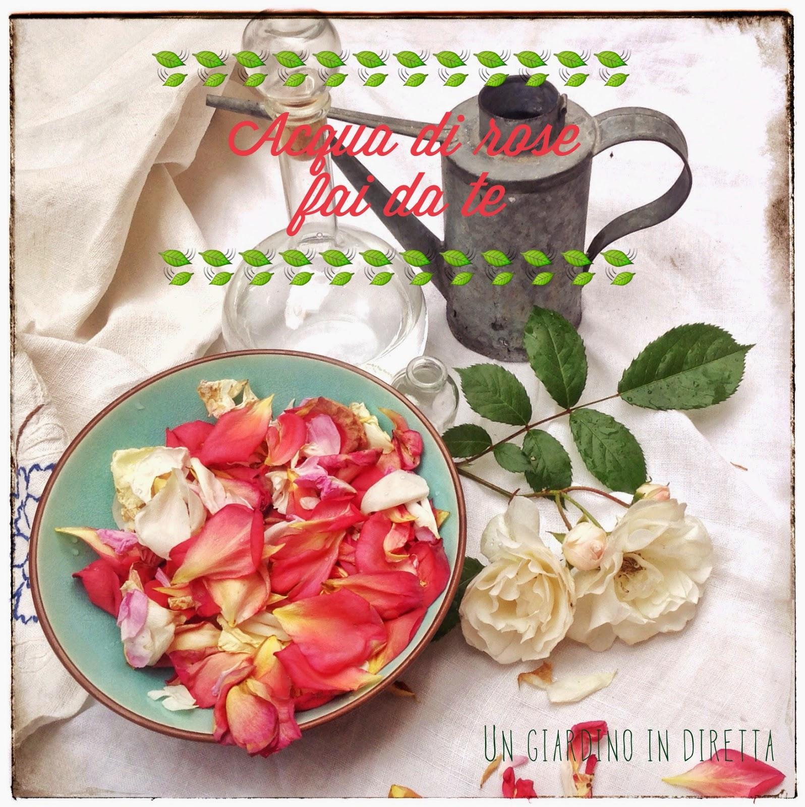 Rose Fai Da Te acqua di rose fai da te - un giardino in diretta