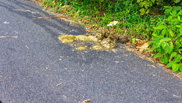 Animal dung on the way from Valparai to Athirapally