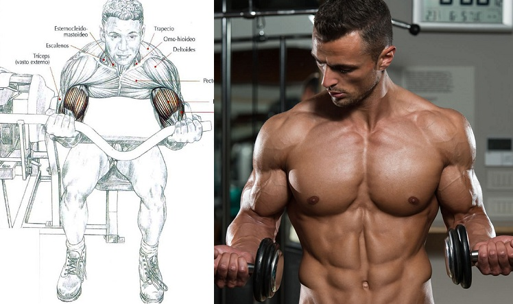 Best Way To Build Bigger Biceps And Triceps