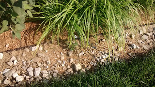 Phytoremediation Plants are growing in a bed of Gravel and Rock allowing the roots of the plants direct contact with the toxins that will be removed by Phytoremediation.