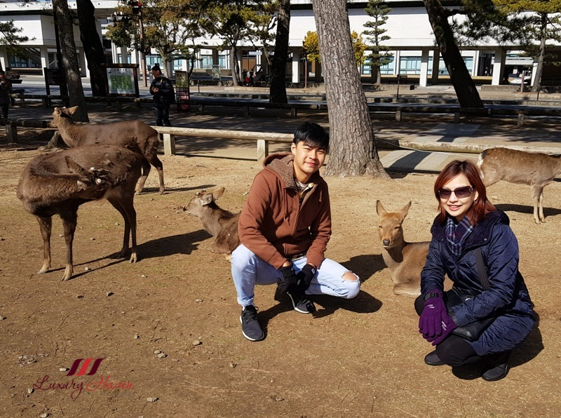 deer feeding in nara park japan