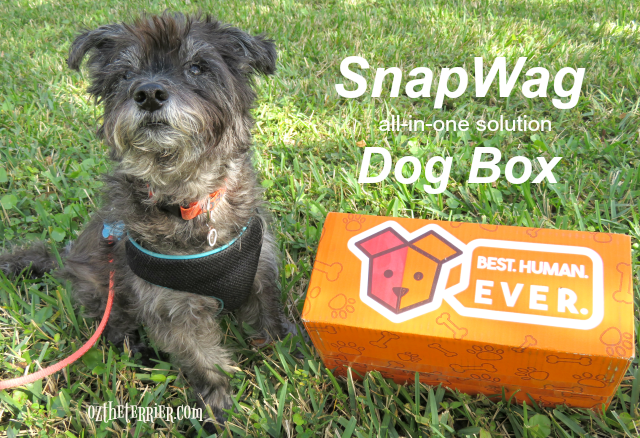 oz with snapwag all-in-one solution dog box