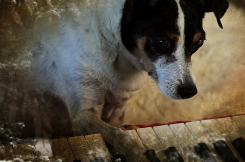 Cinema e missili heart of a dog laurie anderson 2015 - Ludwig wittgenstein pensieri diversi ...
