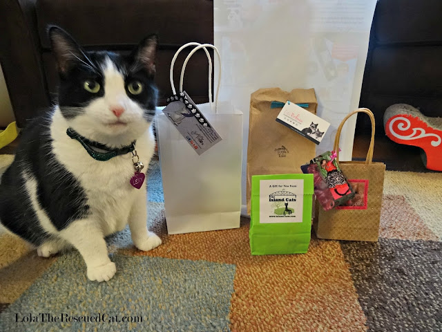cat with gift bags