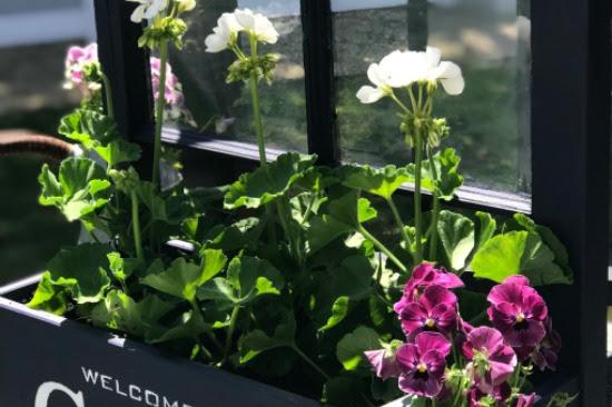 Window Flower Box Garden Planter