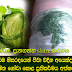 You always are persecuted for headaches soldier, then try this amazing cabbage leaves remediation