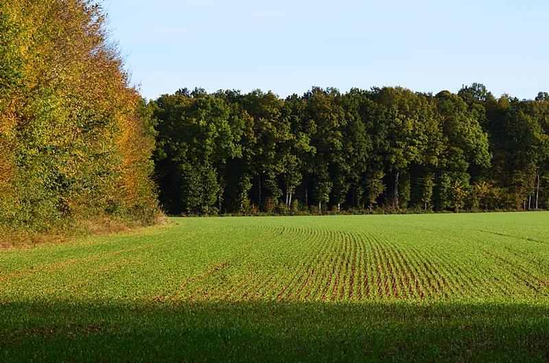 Campagne automne arbres blé Puisaye