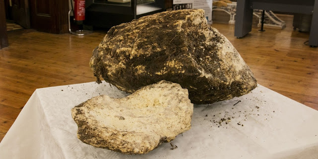 2,000 year old butter found in Irish bog