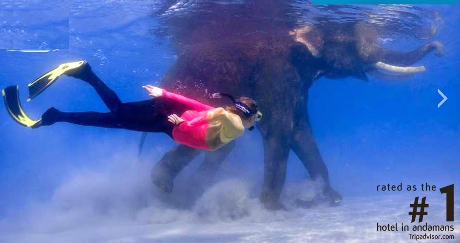 Diving with Elephants in Andaman